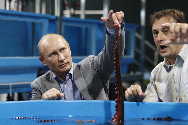 океанариум на русском острове владивосток фото