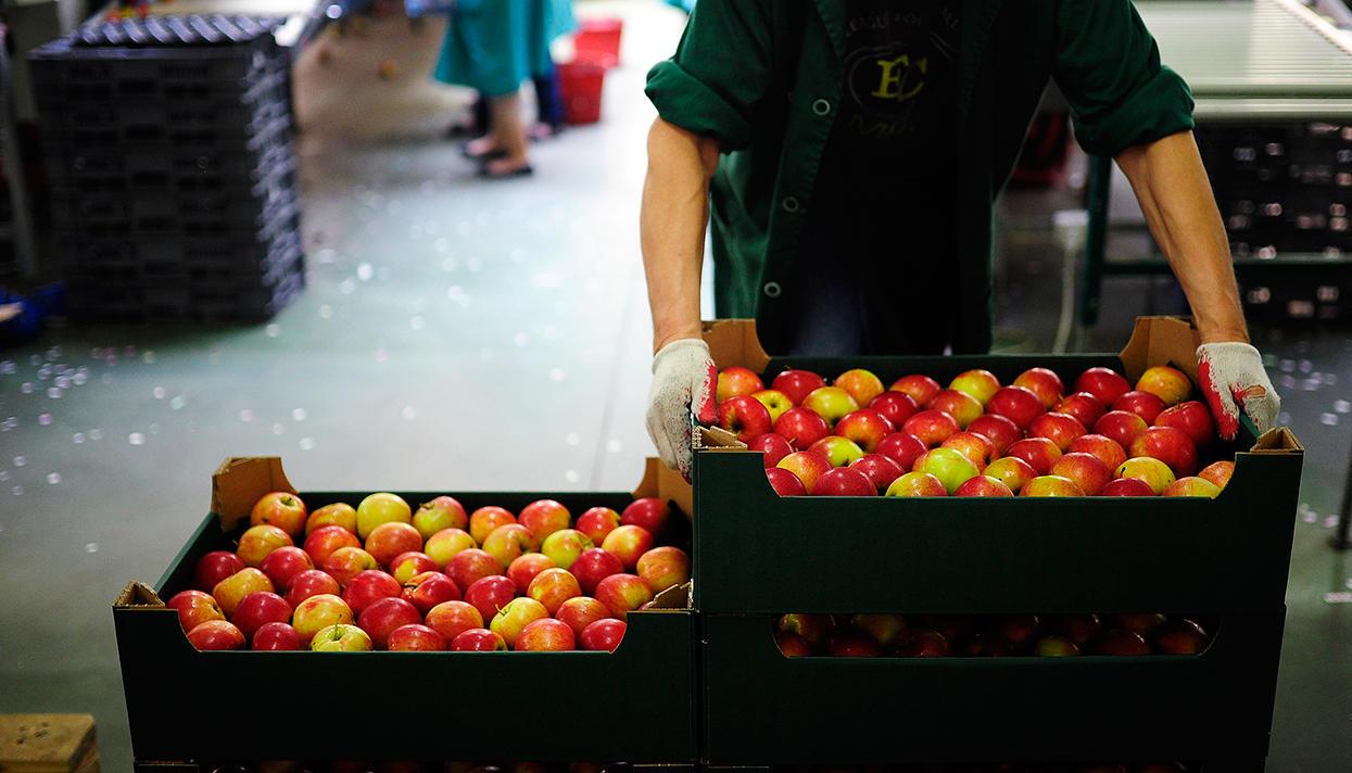 Картинки по запросу польша яблоки санкции