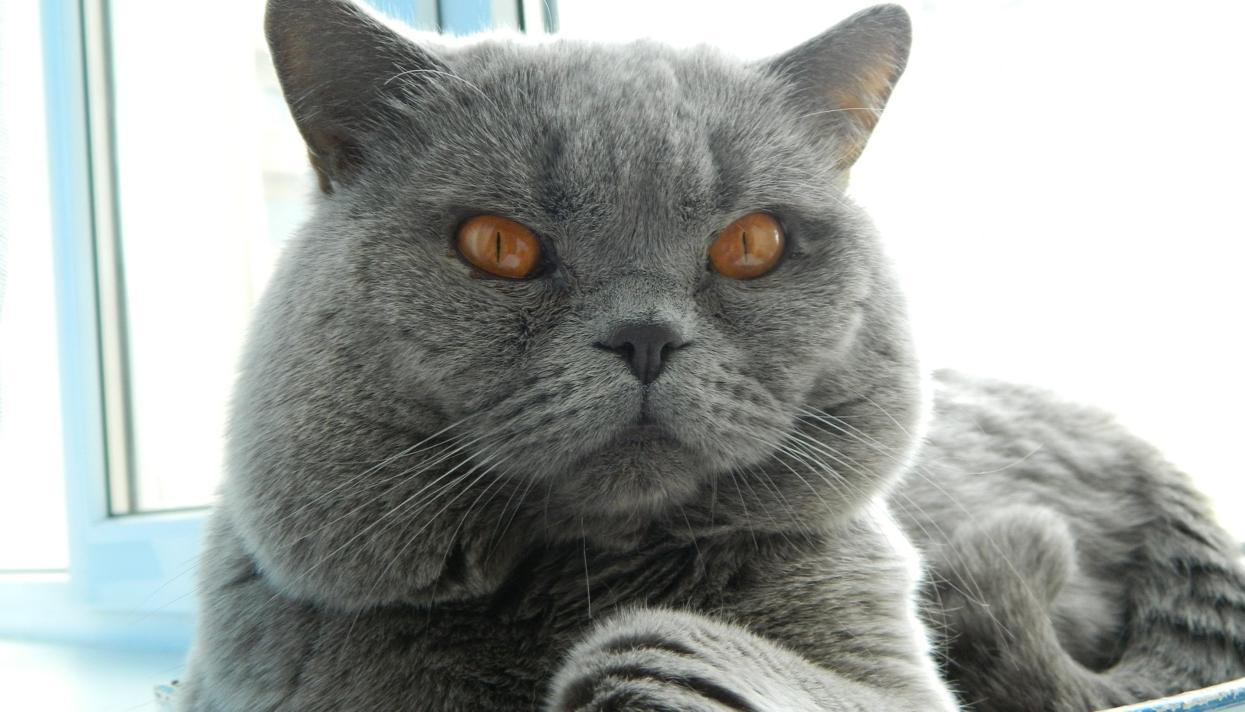 Сайт котов ростов