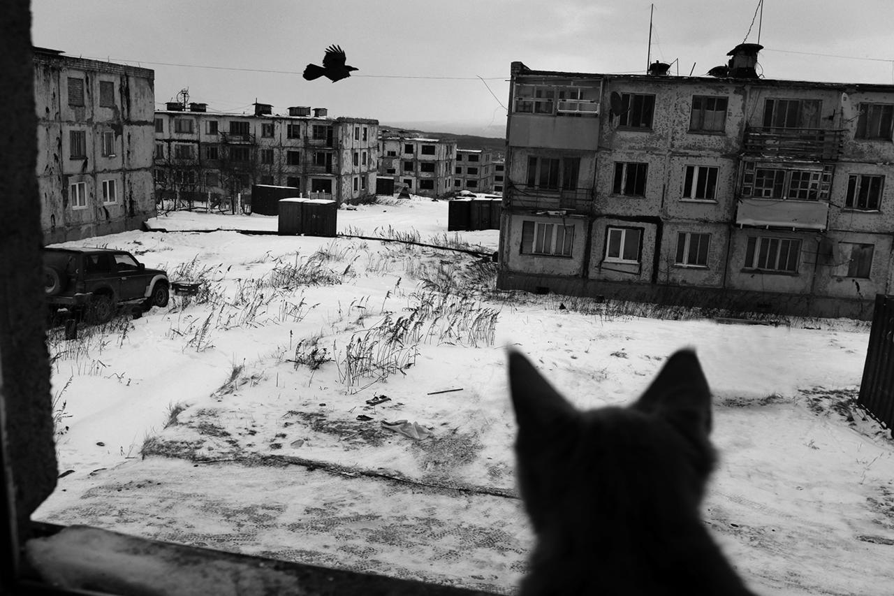 Вид из окна квартиры, в которой живут военный пенсионер, его жена, двое детей и рыжий котенок