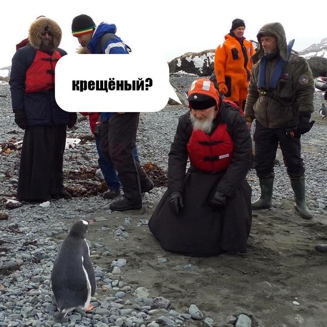 Глава РПЦ Кирилл посетил пингвинов в Антарктиде - Цензор.НЕТ 1361