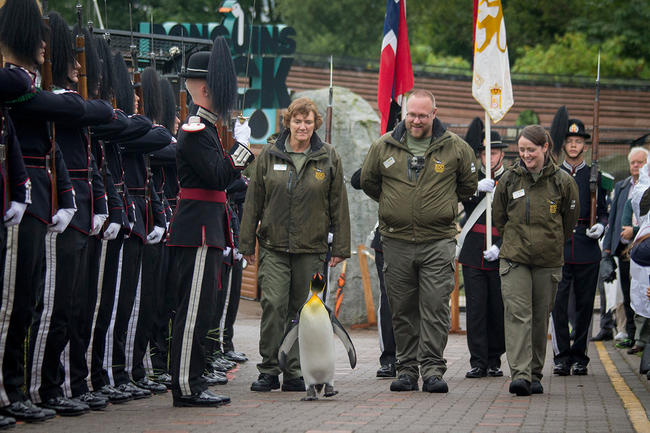 ВНорвегии пингвин стал генералом Королевской гвардии