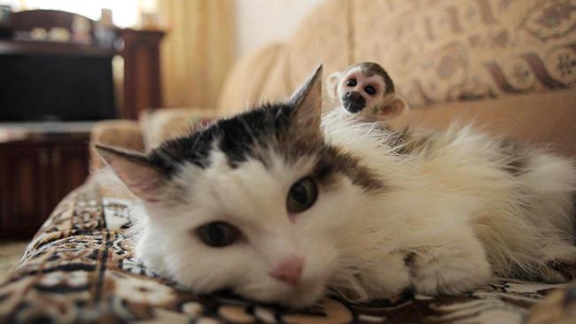 ВТюмени 16-летняя кошка усыновила новорожденную обезьянку