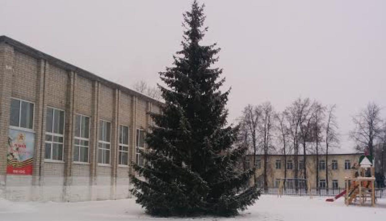 Власти поселка вТюменской области установили наплощади елку изпалисадника пенсионерки