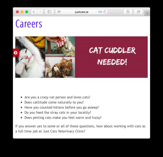 ВИрландии ищут сотрудника надолжность «обнимателя котиков»