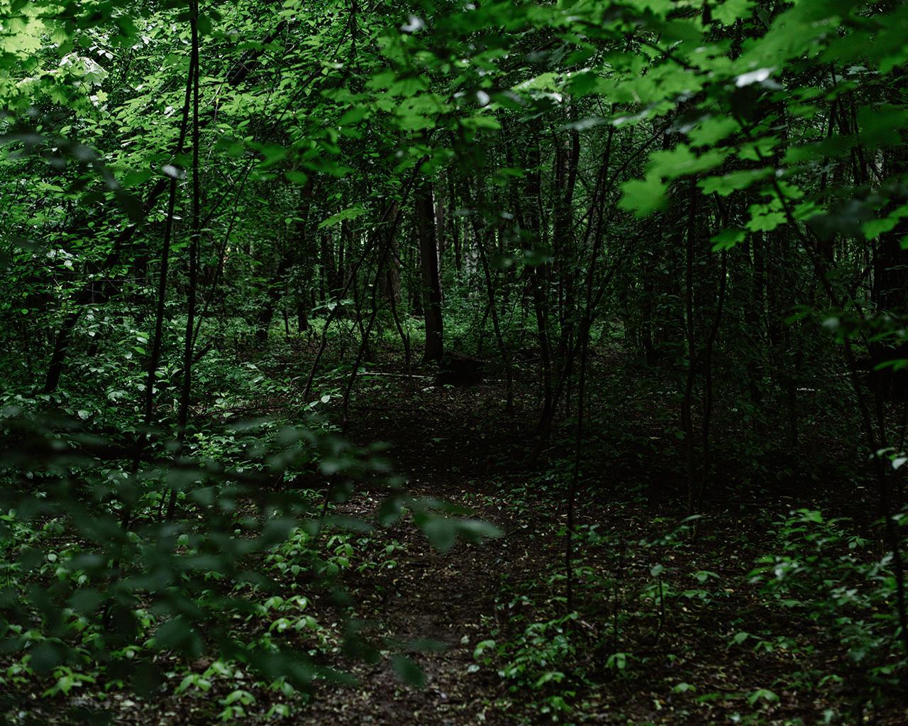 Секс в лесу случайный мне хотелось