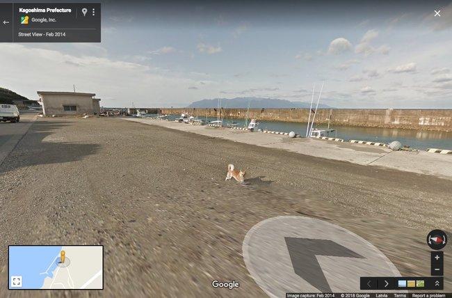 ВЯпонии собака погналась замашиной, снимавшей панорамы для Google Street View