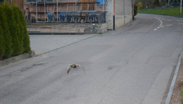 ВШвейцарии утки дважды затри дня попались нанарушении скоростного режима