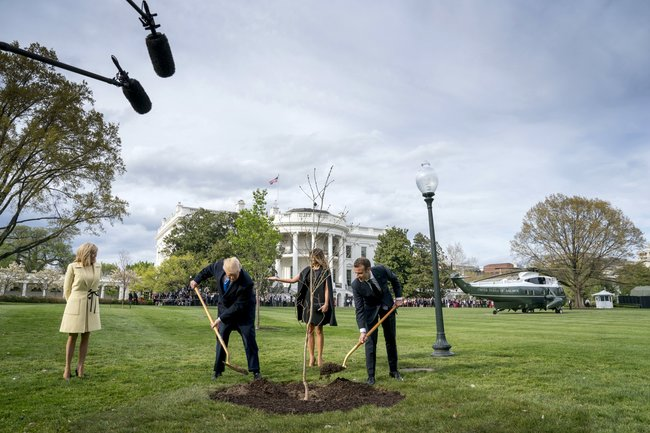 Помните, Эммануэль Макрон иДональд Трамп посадили дуб, иэто тутже стало мемом? Так вот, дуб исчез