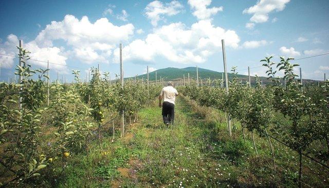 Бизнесмен изРостова-на-Дону Константин Ластович всвоем яблоневом саду награнице Южной Осетии иГрузии, июль 2018 года
