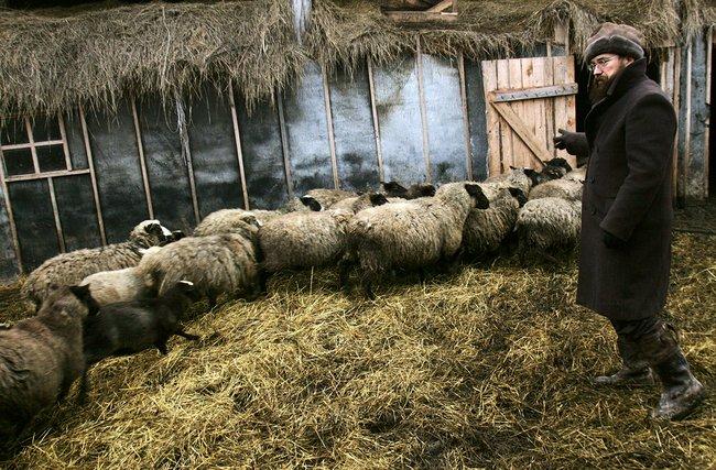 Стерлигов впервой Слободе под Можайском, 30ноября 2006 года