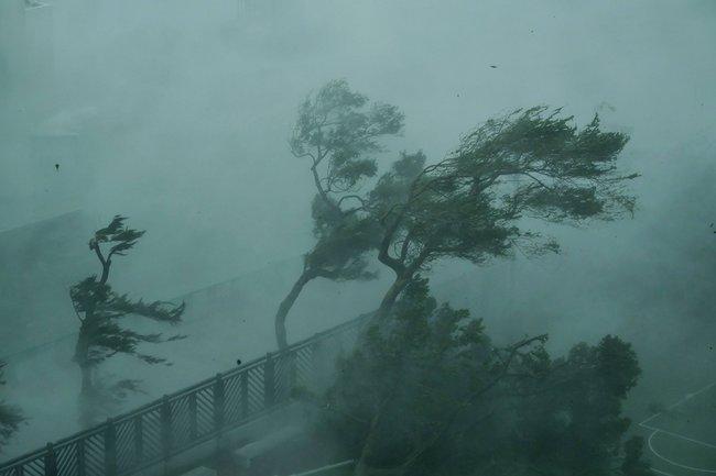 Деревья нагонконгской набережной вовремя тайфуна
