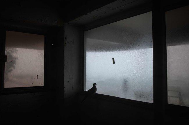 Голубь укрывается оттайфуна взаброшенном здании вГонконге