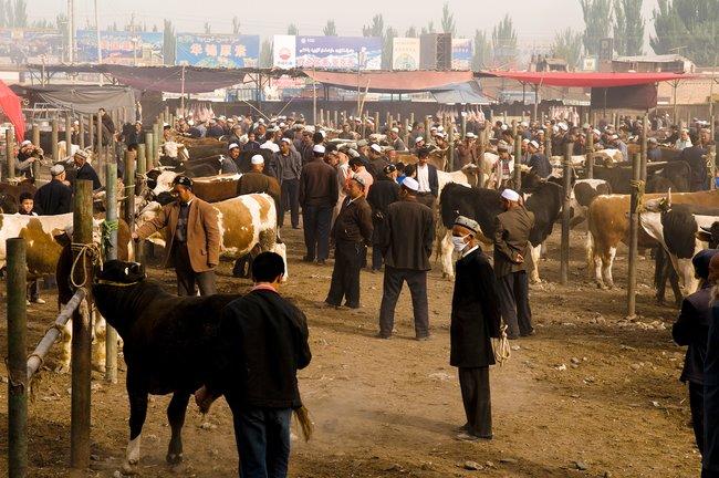 Воскресный рынок скота встаром городе вКашгаре, 27июля 2009 года