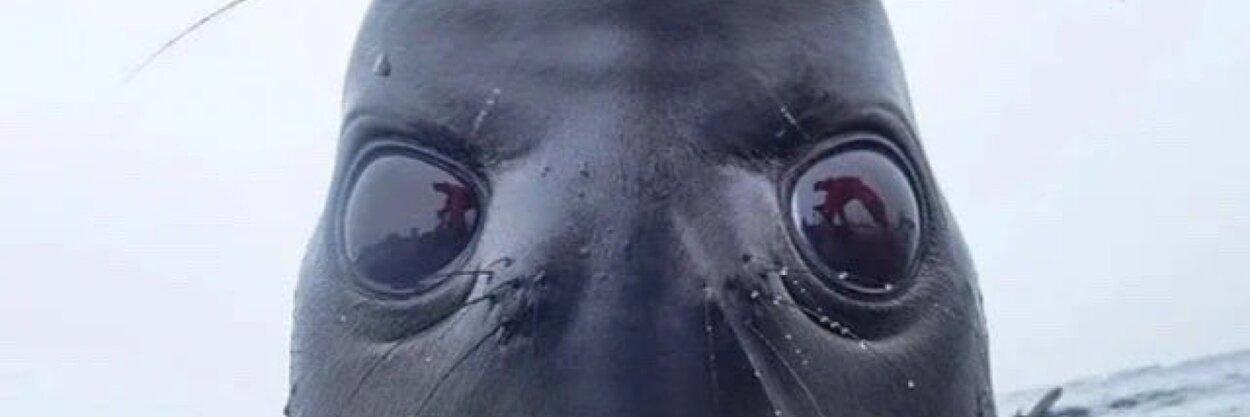Человекоподобный тюлень глядит прямо вдушу. Жаль, что фотошоп— зато какой!