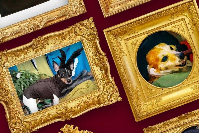 Гоген или Рембрандт? Угадайте по