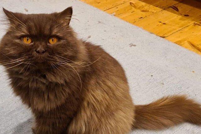 Русский кот Иван мигрировал в Англию. Как, с кем и когда он туда попал  никто не знает, но всем очень интересно
