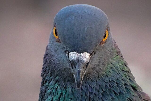 В Ливерпуле законопослушный голубь перешел дорогу в положенном месте
