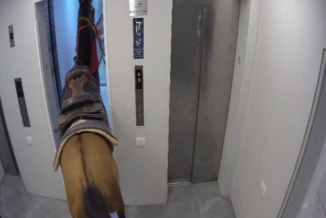 В Тель-Авиве лошадь прокатилась на лифте в небоскребе. Да, поместилась. Нет, это не анекдот