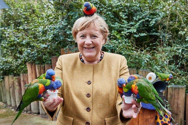 Германия: готовится распрощаться с Меркель  Меркель: кормит попугаев . Кто самый милый канцлер в мире