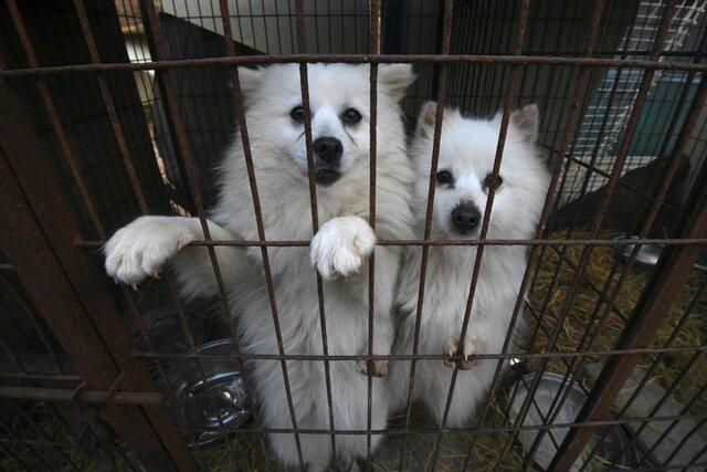 Президент Южной Кореи предложил обсудить запрет есть мясо собак. Сторонников такого запрета встране становится все больше— особенно среди молодежи