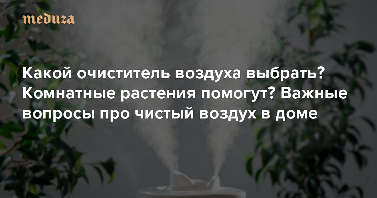 Комнатные растения для очистки воздуха