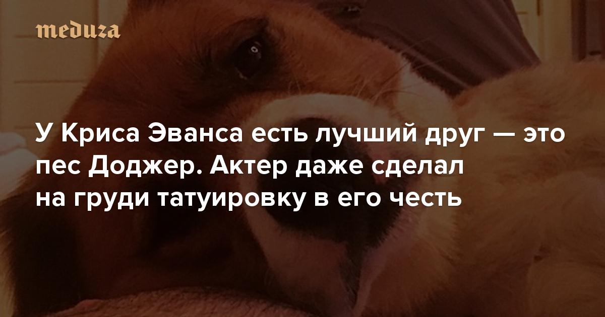 УКриса Эванса есть лучший друг— это пес Доджер. Актер даже сделал татуировку вего честь насвоей груди