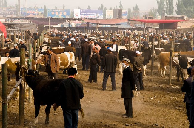 A recently reinstated cattle market in Kashgar's Old City, July 27, 2009